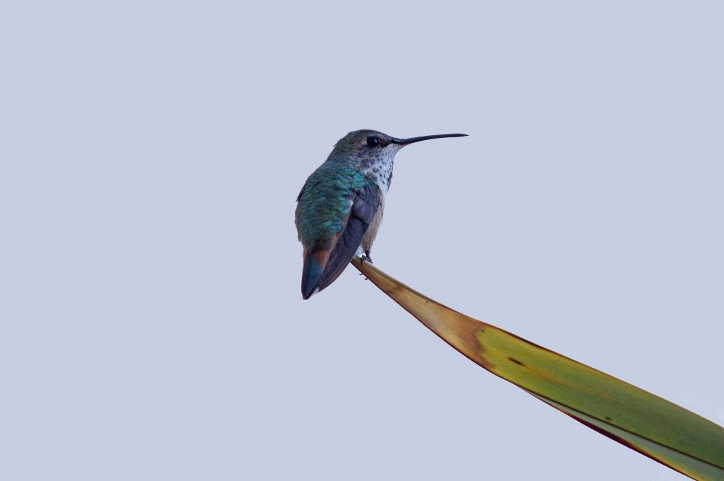 autisme hummingbird-1820752_1920